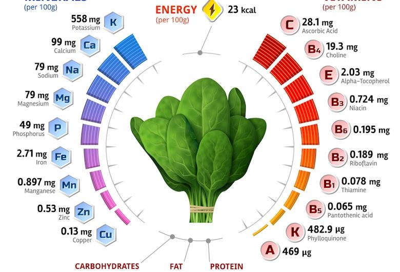菠菜的微量营养素含量