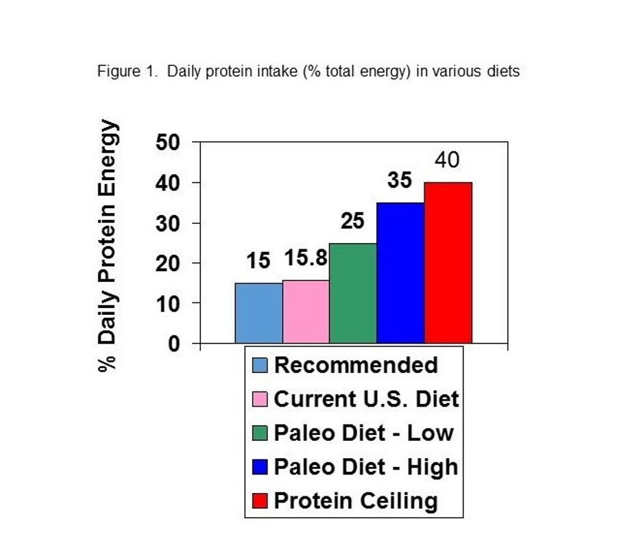https://thepaleodiet.imgix.net/images/Percent-Protein-Energy-in-Various-Diets-e1476549123578.jpg?auto=compress%2Cformat&fit=clip&q=95&w=900
