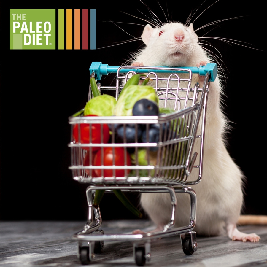 I smell a rat, well actually prediabetic New Zealand Obese (NZO) mice. image