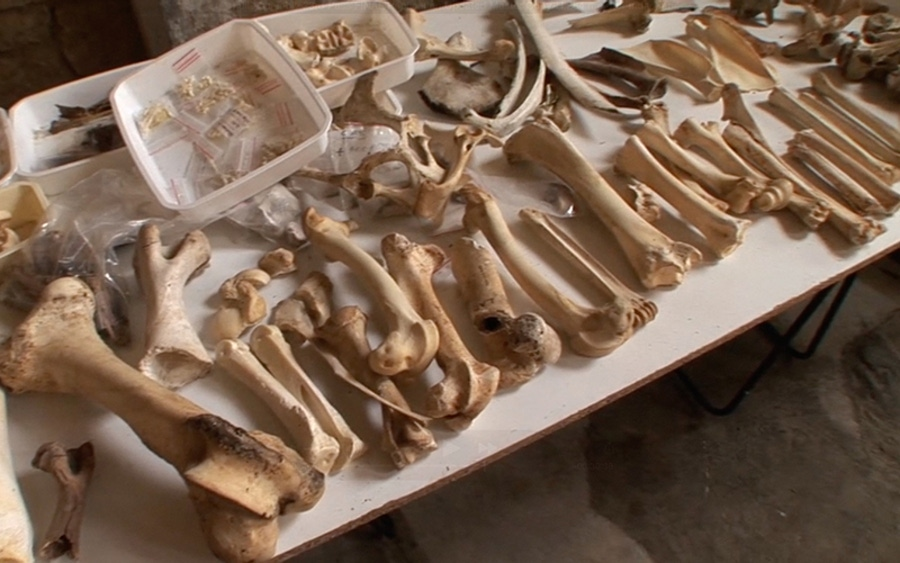 Think Again: Early Modern Humans Did Not Eat Anything They Could Get Their Hands On image