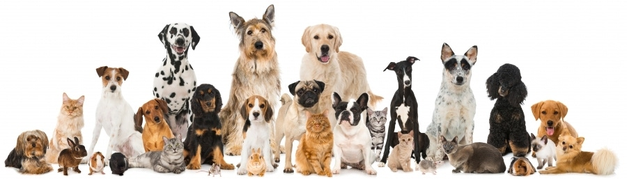 """""""Paleo For Dogs? Vets Say Trendy Diet Could Make Humans Sick"""" image"""