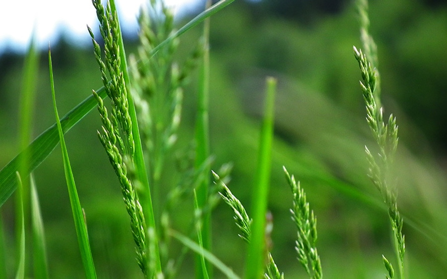 PNAS Early Edition Isotopic Data Does Not Indicate Grass Consumption image
