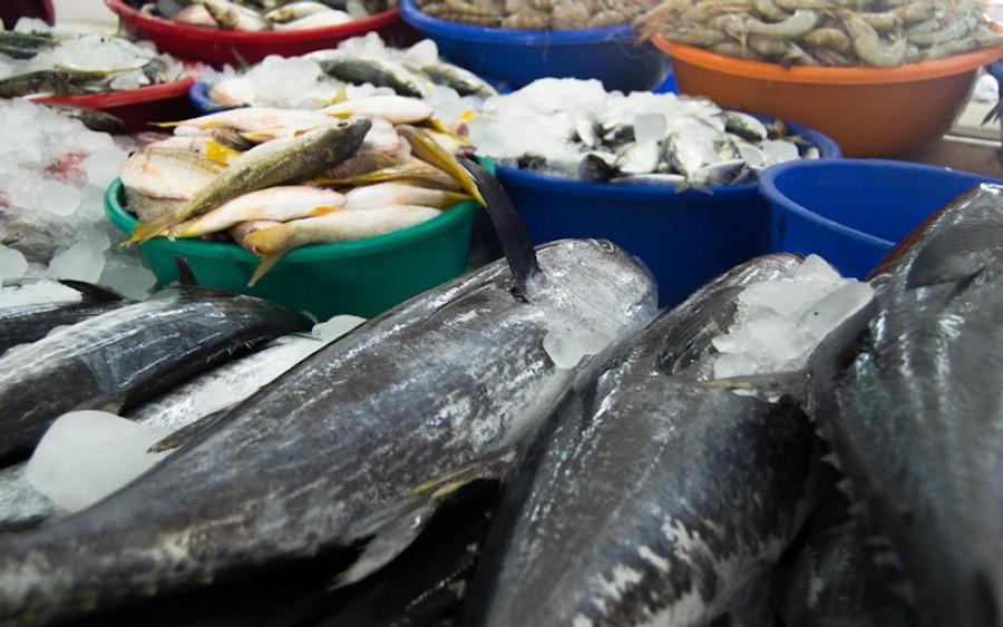 https://thepaleodiet.imgix.net/images/omega3-fatty-acids-in-fish.jpg?auto=compress%2Cformat&fit=clip&q=95&w=900