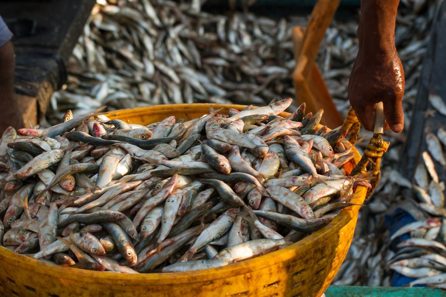 Can fish production save us from ourselves? image