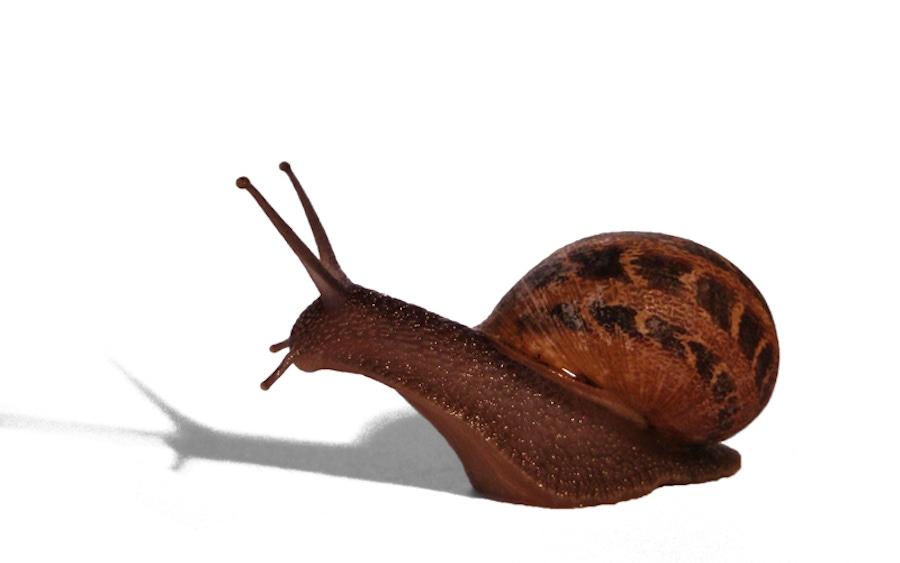 https://thepaleodiet.imgix.net/images/snails.jpg?auto=compress%2Cformat&fit=clip&q=95&w=900
