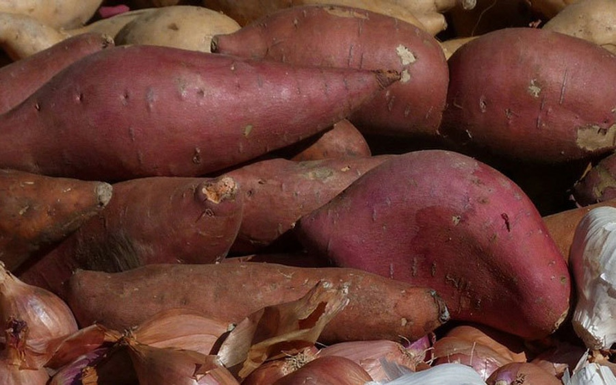 Sweet Potatoes for the Okinawans image